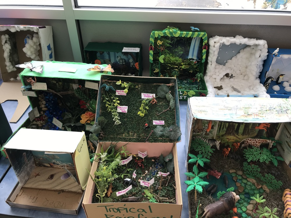 2nd Grade Habitat Projects
